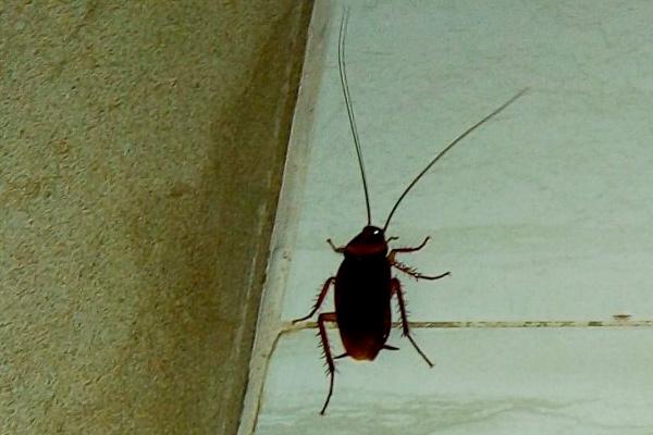 насекомое крупным планом фото