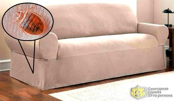постельные клопы в диване