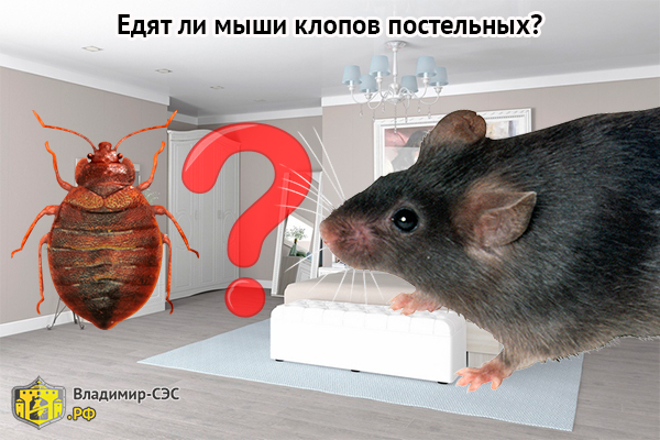 мыши едят клопов