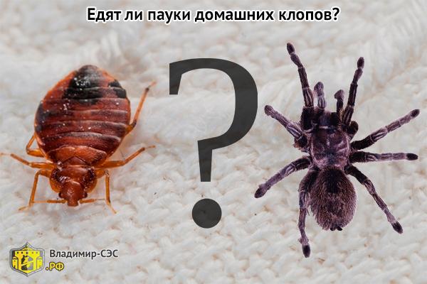 пауки едят клопов