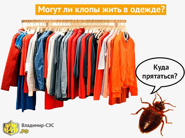 Клопы живут в одежде