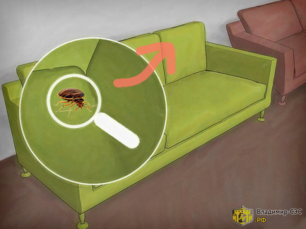 клопы в диванных подушках
