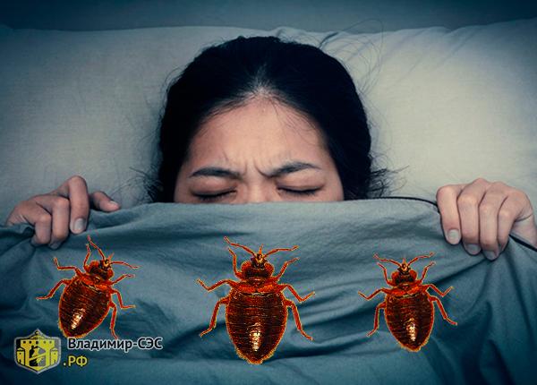 К чему снятся клопы во сне женщине