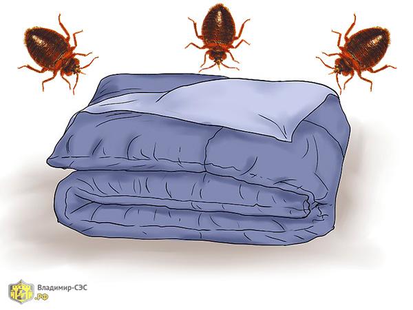 клопы живут в одеяле