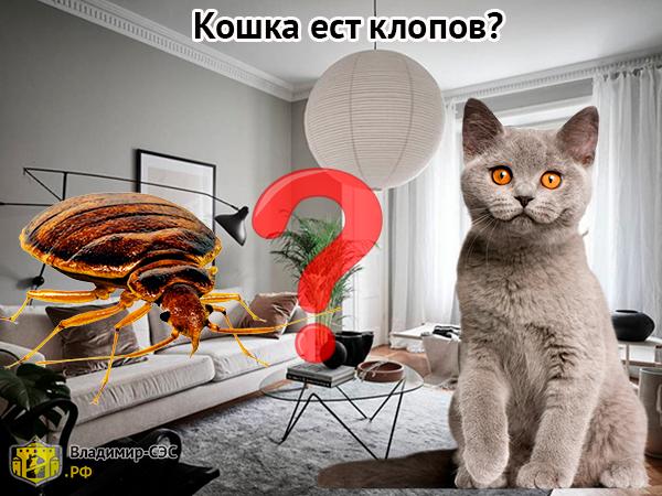 кошка ест клопов