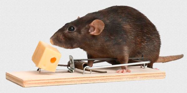 избавиться от мышей мышеловкой