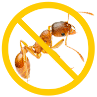 уничтожение муравьёв в квартире