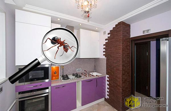 избавление от рыжих муравьев в квартире
