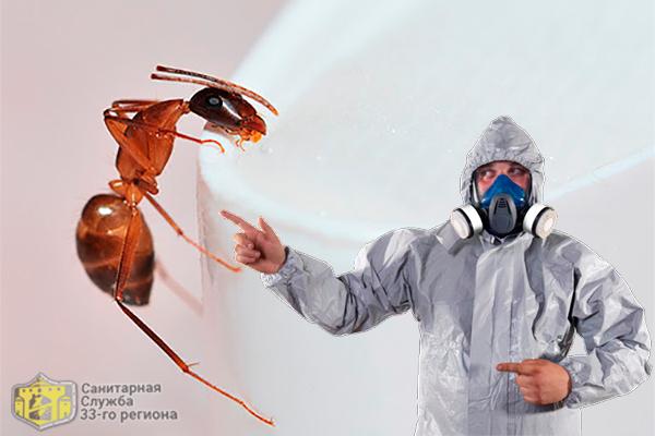 обработка квартиры от муравьев профессионалами