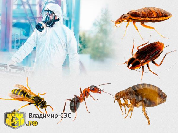 насекомые служба сэс