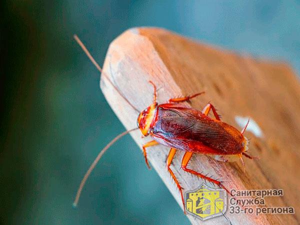 тараканы вред