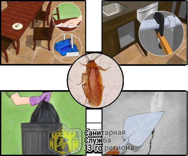 способы ликвидации тараканов