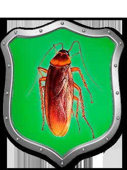 тараканы пруссаки